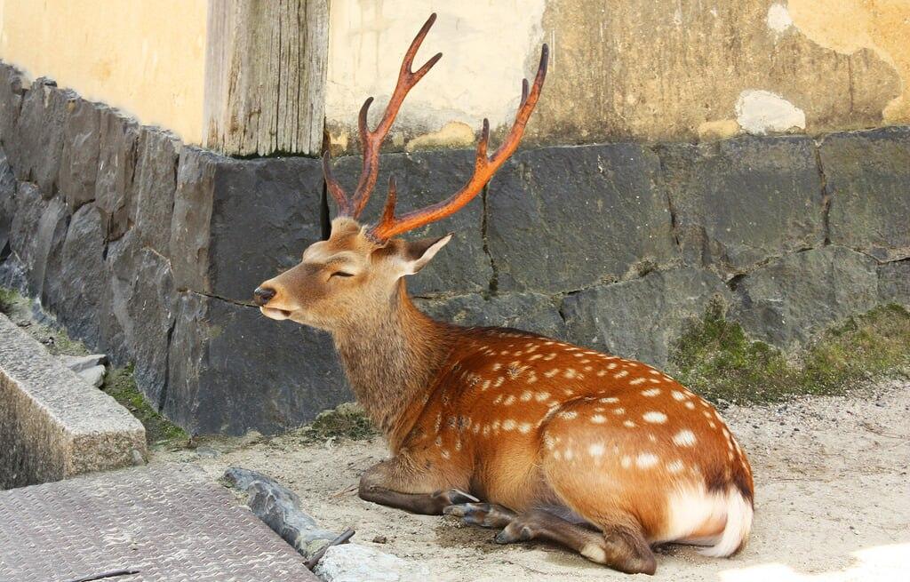新旧奈良土産の定番はコレ。古への都・奈良市でおすすめのお土産4選