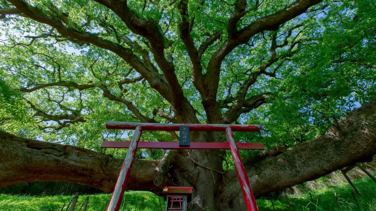 志々島は樹齢1200年の大楠が印象的!瀬戸内海の景色も◎