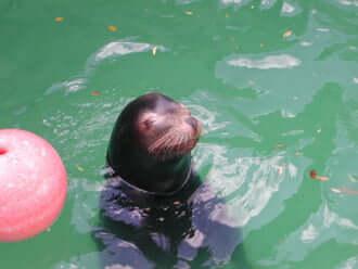 愛媛で絶大な人気を誇る「とべ動物園」のおすすめ観光情報!
