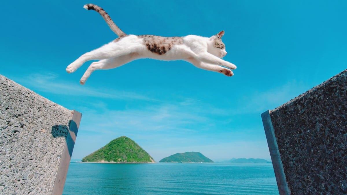 猫が大ジャンプする写真で人気の香川県・佐柳島。撮影のコツは?
