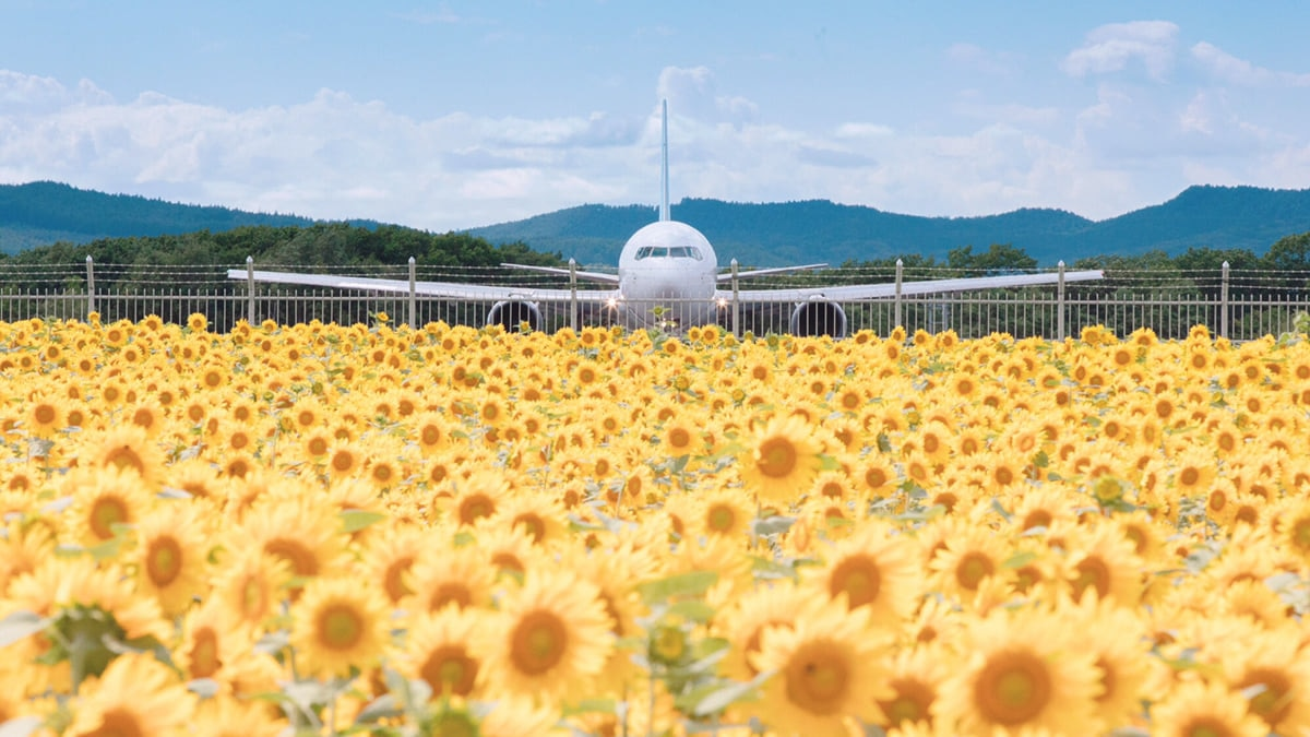 【女満別空港ひまわり畑】まるでお花畑に飛行機が着陸!?SNS映え撮影スポット