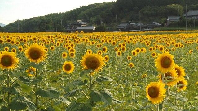 自然と水源を活かした香川県まんのう町のおすすめ観光スポットを9つ ...