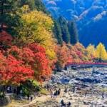 四季折々で美しい姿を見せる香嵐渓の観光情報をお届けします!(画像は香嵐渓の紅葉)