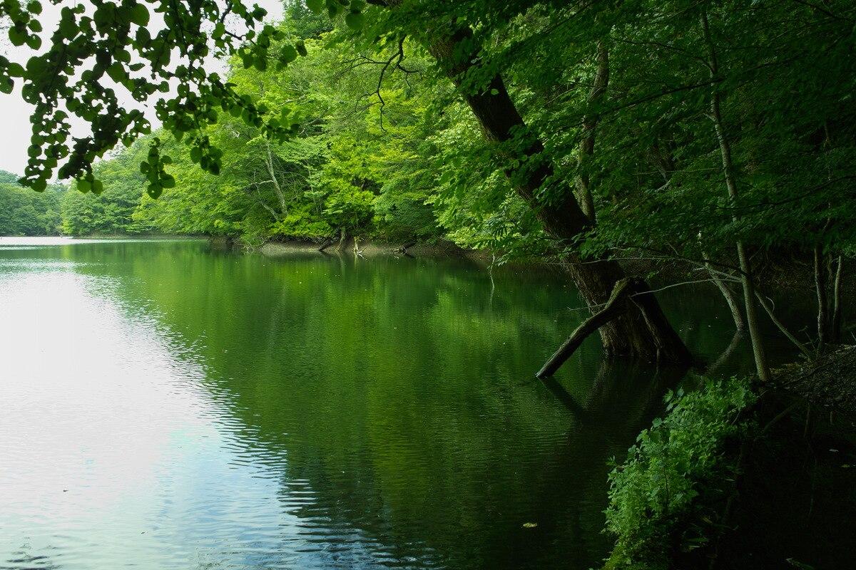 目の前に広がる神秘的な大自然を堪能しよう!青森・白神山地の観光5選