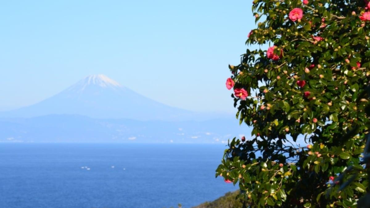 世界が認めた椿園!伊豆大島の3大椿園をめぐる「椿づくしツアー」