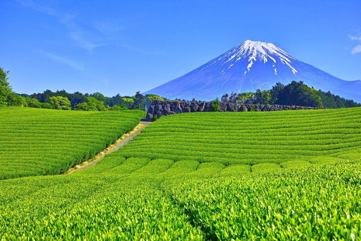 静岡 県 観光 【2021年】静岡のおすすめ観光スポット30選!定番から穴場まで