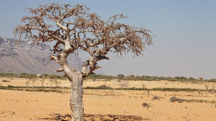 世界一危険な国?ソマリアに行く前に知っておきたい治安情報