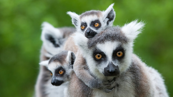 動植物との出会いと感動の連続!マダガスカルのおすすめ観光10選