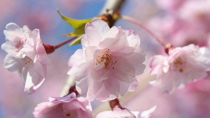 徳川家康が愛した桜の街・東金市のおすすめ観光スポット8選!