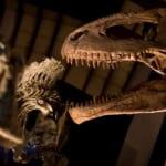 夜の博物館を初体験!宿泊もできちゃう「奥出雲多根自然博物館」