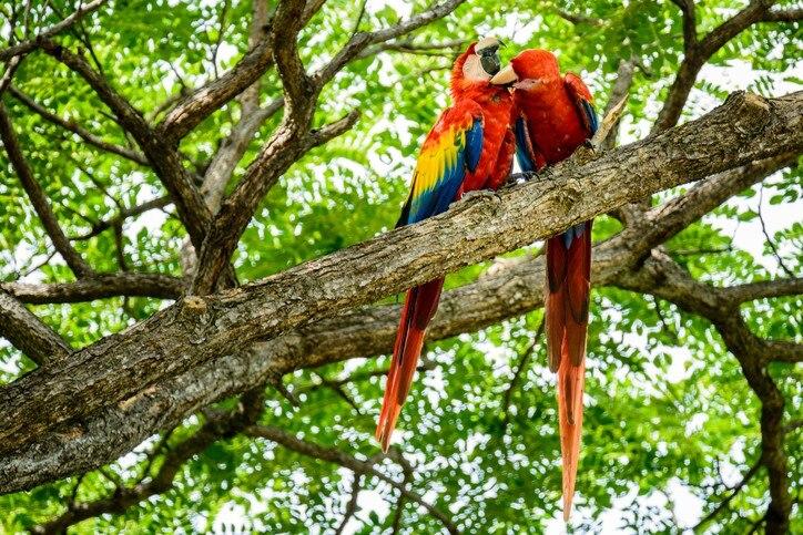中米随一のエコツーリズムの国、コスタリカのおすすめ観光スポット14選