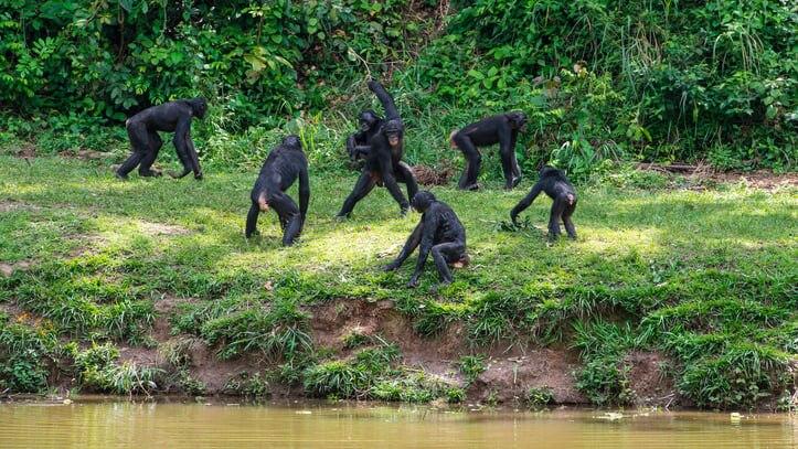 珍獣が住むコンゴの世界遺産!アフリカ第2の規模を誇るサロンガ国立公園