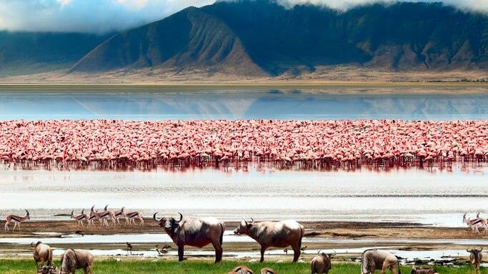 巨大クレーターは世界最大の動物園!世界遺産ンゴロンゴロ保全地域