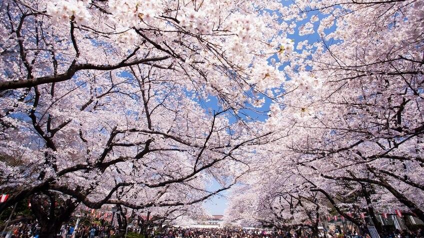 上野で行くべき観光スポット14選!余すとこなく紹介します!