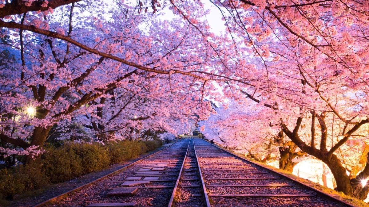 【絶景】京都の穴場観光スポット「蹴上インクライン」の春夏秋冬