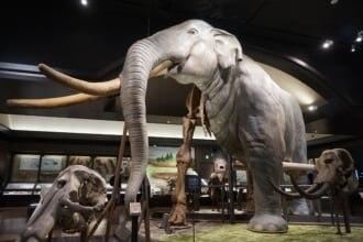 半身復元骨格は滋賀県立琵琶湖博物館の象徴