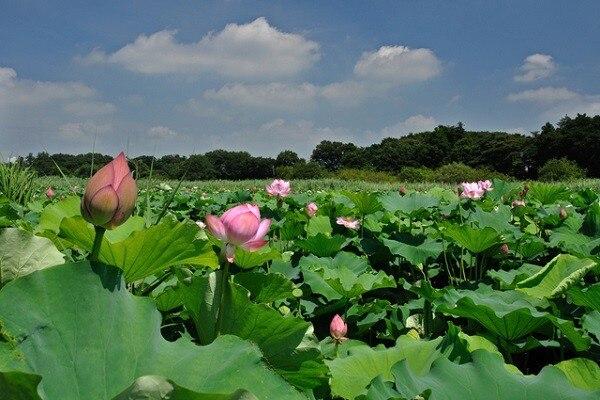 埼玉県蓮田市の観光スポット6選!さあ史跡の町で歴史観光をしよう