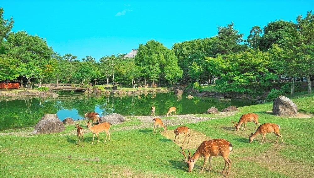 奈良公園で鹿に会える場所はここ!自然豊かな公園で癒されよう