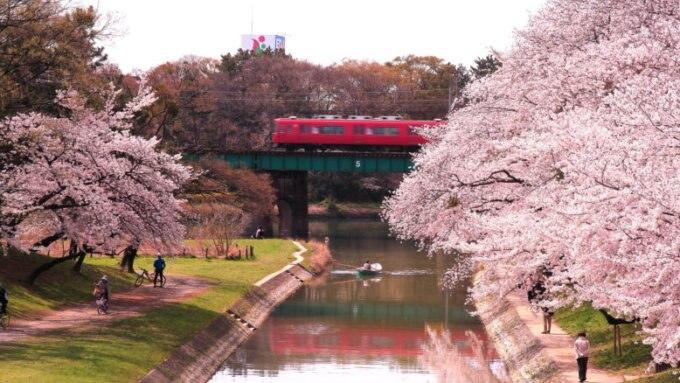 春の岡崎公園