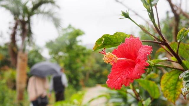 雨の日だって思いっきり楽しめる宮古島のおすすめ観光スポット9選