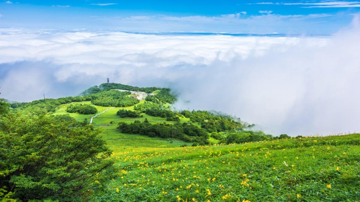高山植物の宝庫・日光霧降高原でこれはやっておきたい!おすすめ5選