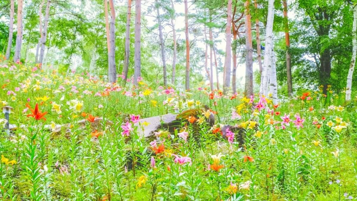 【 長野/諏訪郡】富士見高原リゾート花の里で花々に囲まれ大自然を満喫!