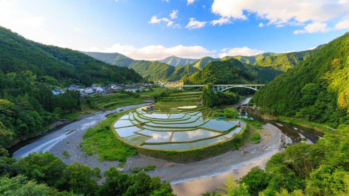 【和歌山/有田川】あらぎ島の魅力!日本の棚田百選の景観を楽しむ