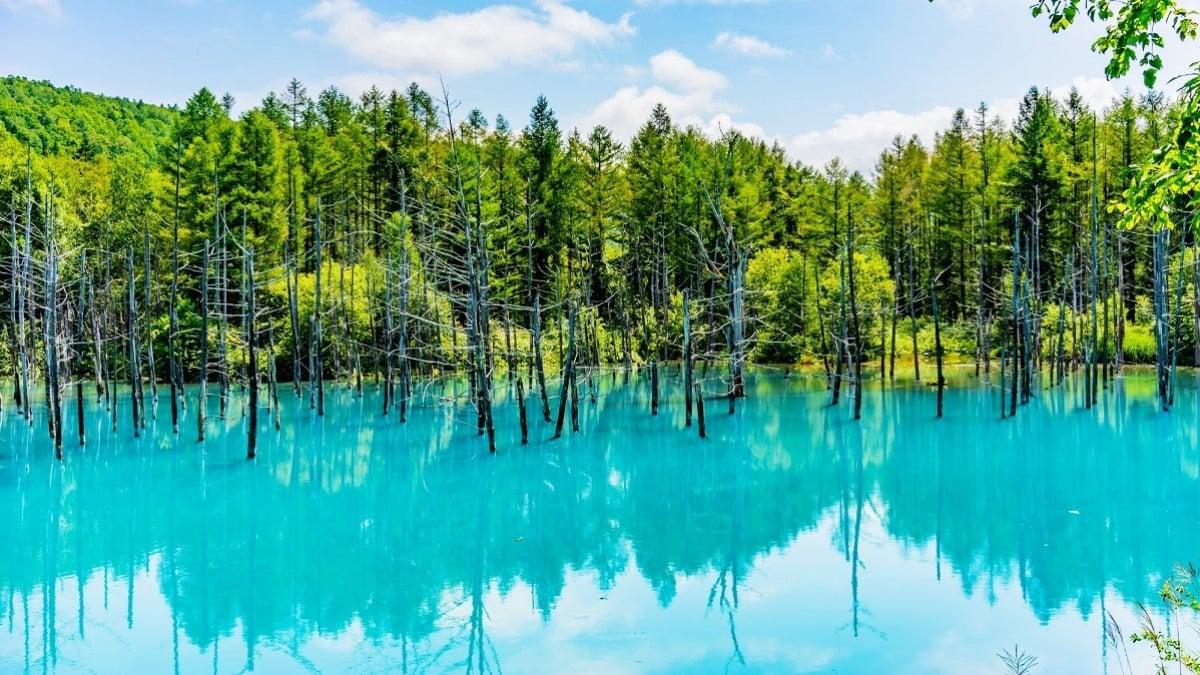 美瑛「青い池」はなぜ青い?冬の雪景色やライトアップ情報もご紹介