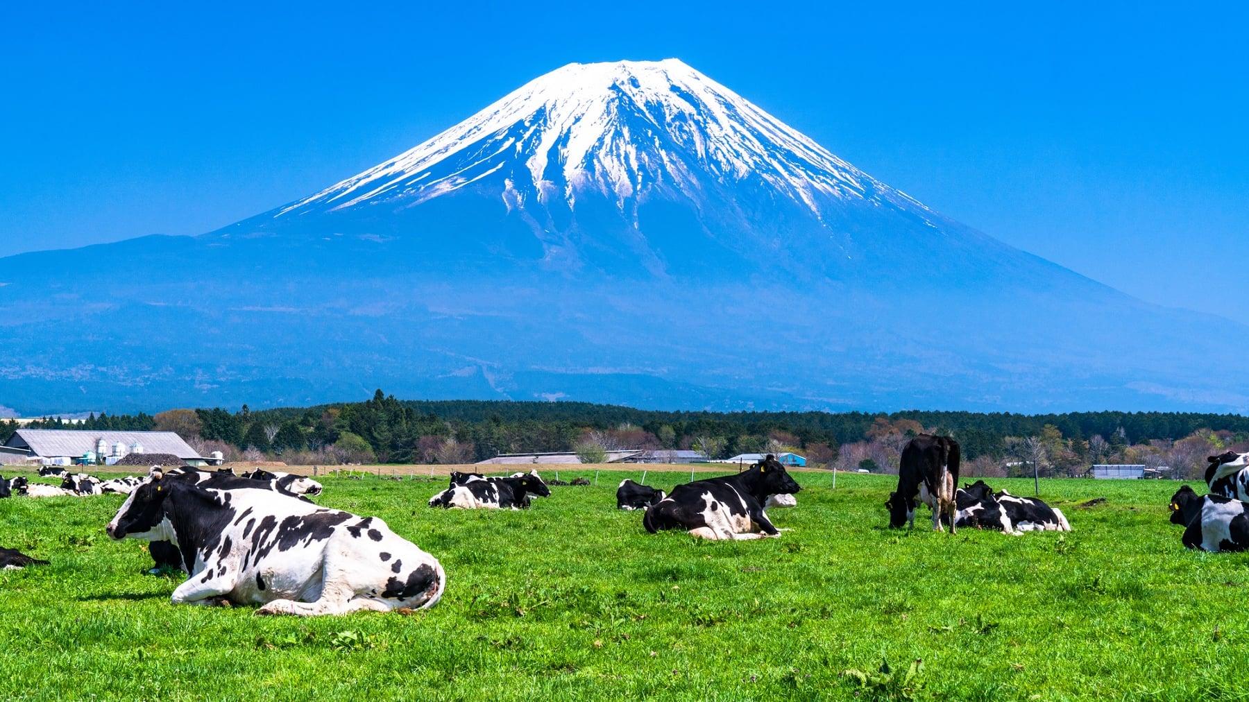 富士山の麓に広がる草原地帯!朝霧高原のおすすめ観光スポットをご紹介!