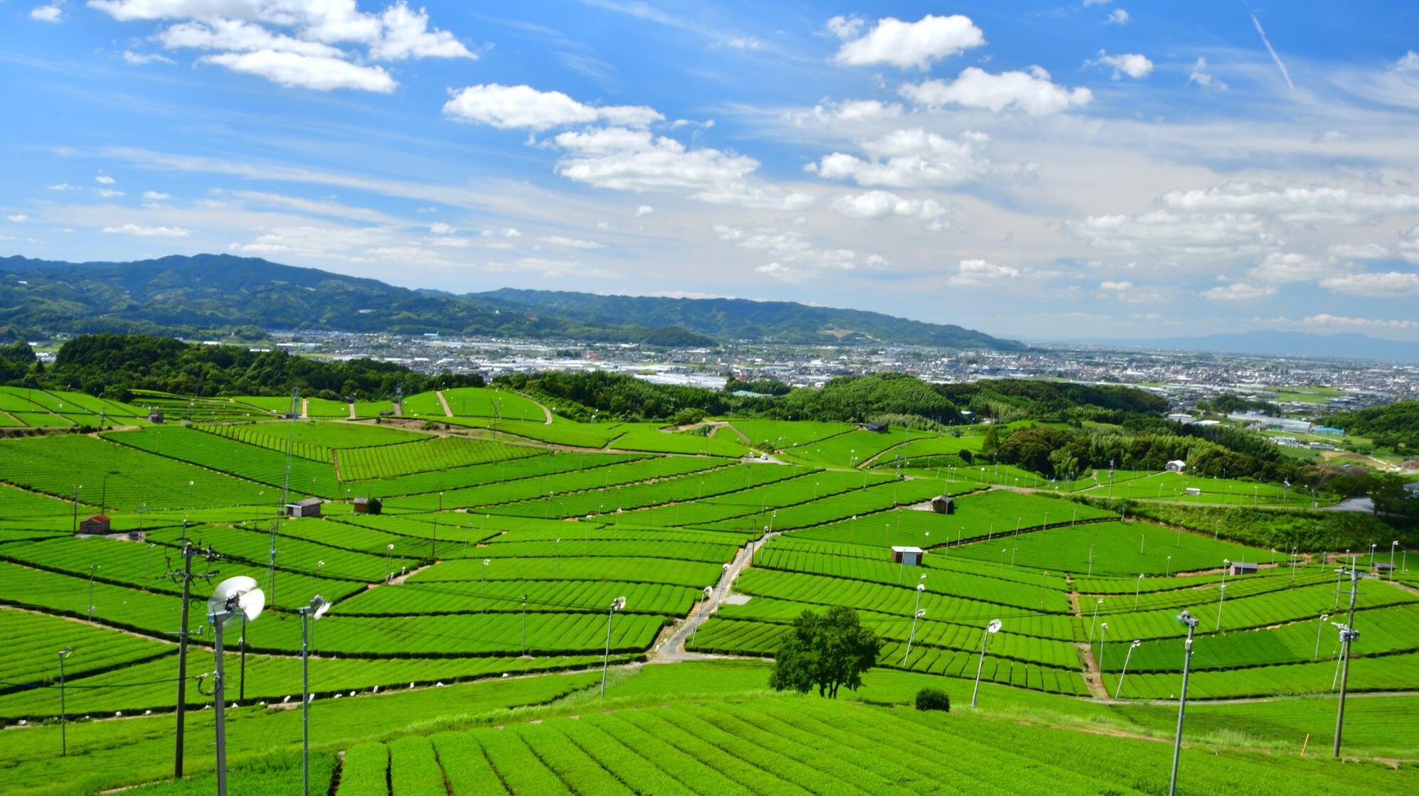 福岡県八女市のホテル事情|検討するなら福岡県第三の都市・久留米も視野に