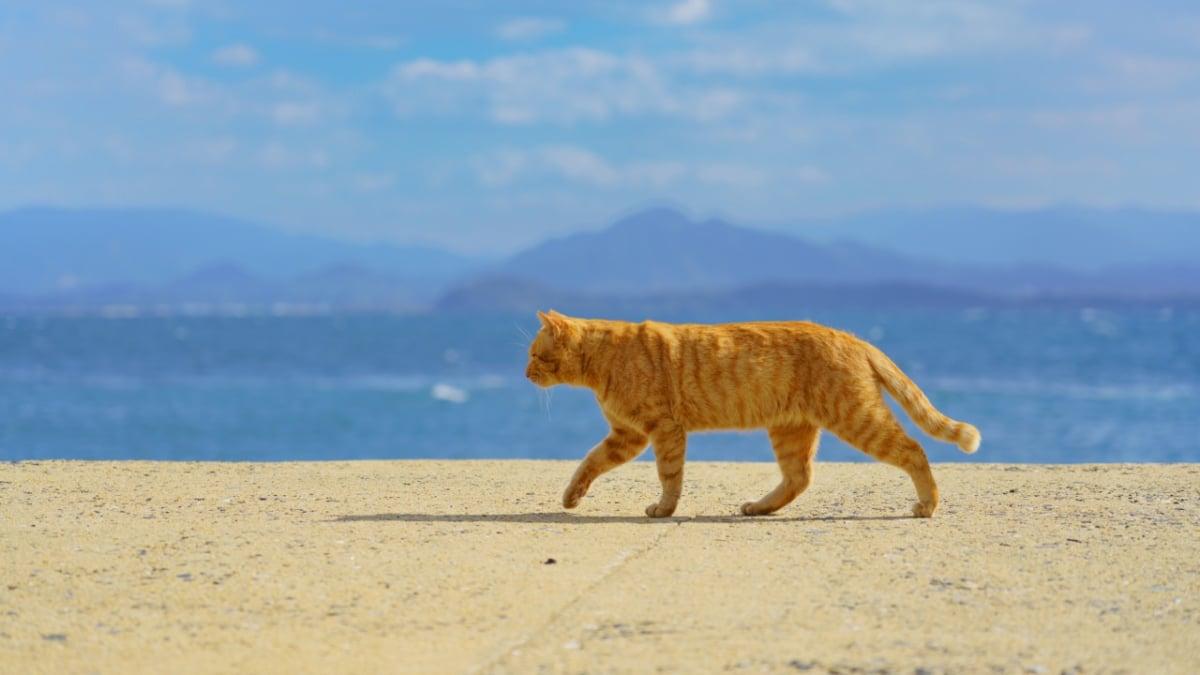 【世界6大猫スポット】福岡、猫の島「相島」に行こう🐈
