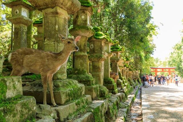 奈良の歴史を物語る世界遺産「古都奈良の文化財」を詳しくご紹介!
