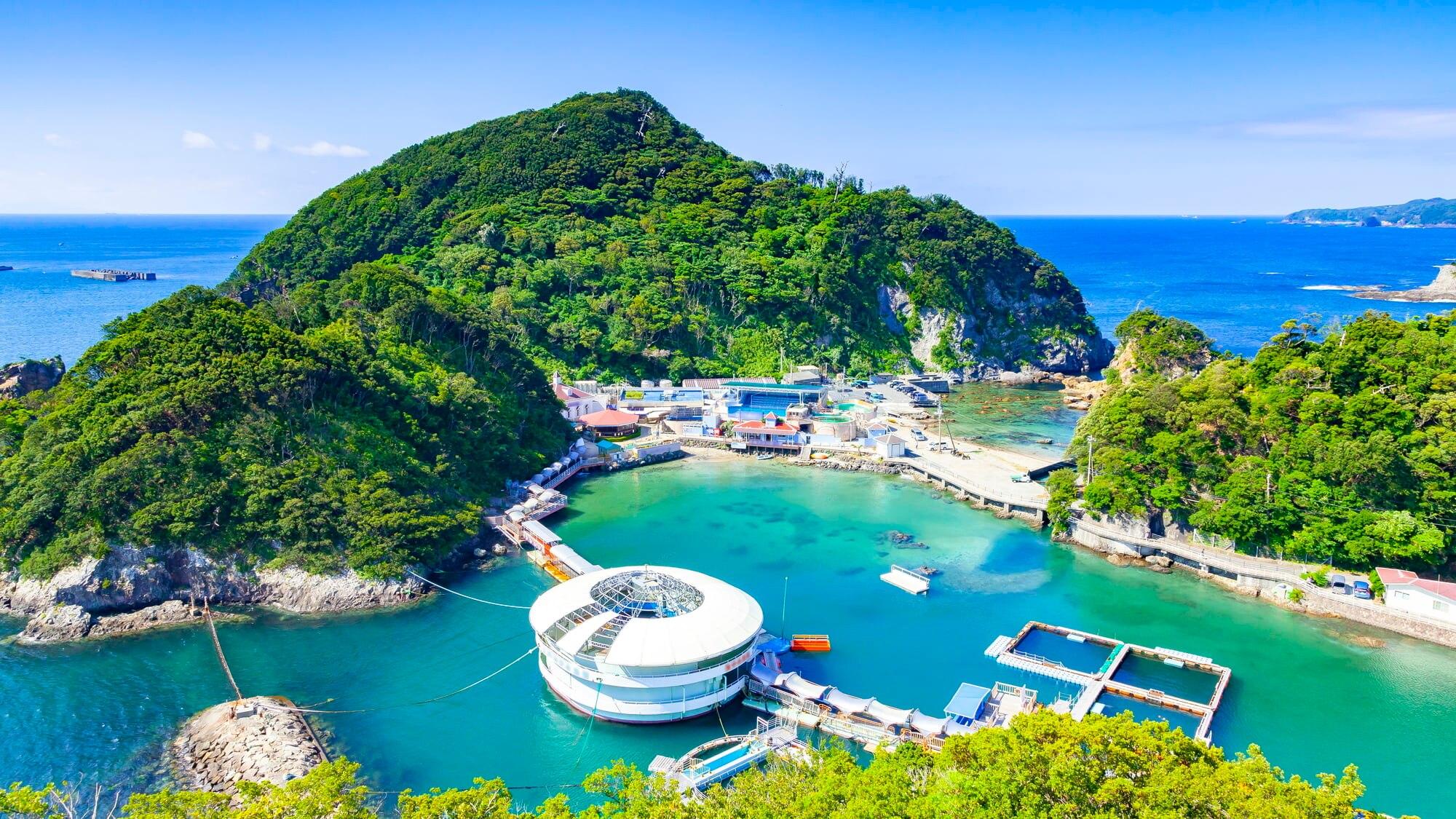 イルカとのふれあいだけじゃない!人気上昇中「下田海中水族館」の魅力とは?