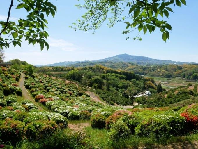 春の田原坂公園と木葉山 (熊本市)