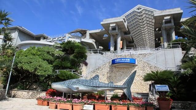 本部町の人気観光スポット「美ら海水族館」の見どころをご紹介!