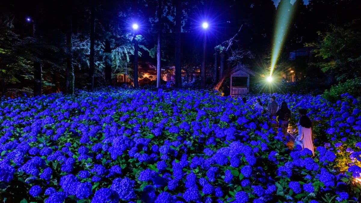 【雲昌寺】青々としたアジサイが美しい秋田県男鹿市の寺