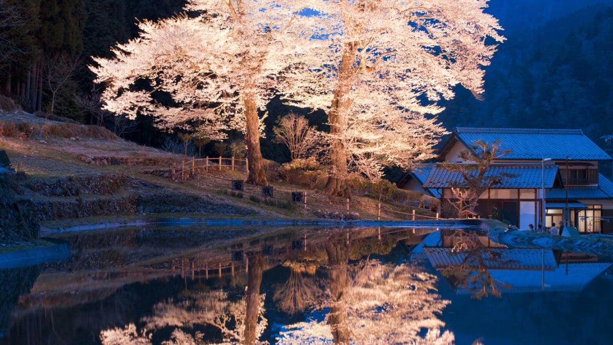 桜が見える露天風呂!お花見できる温泉宿5選