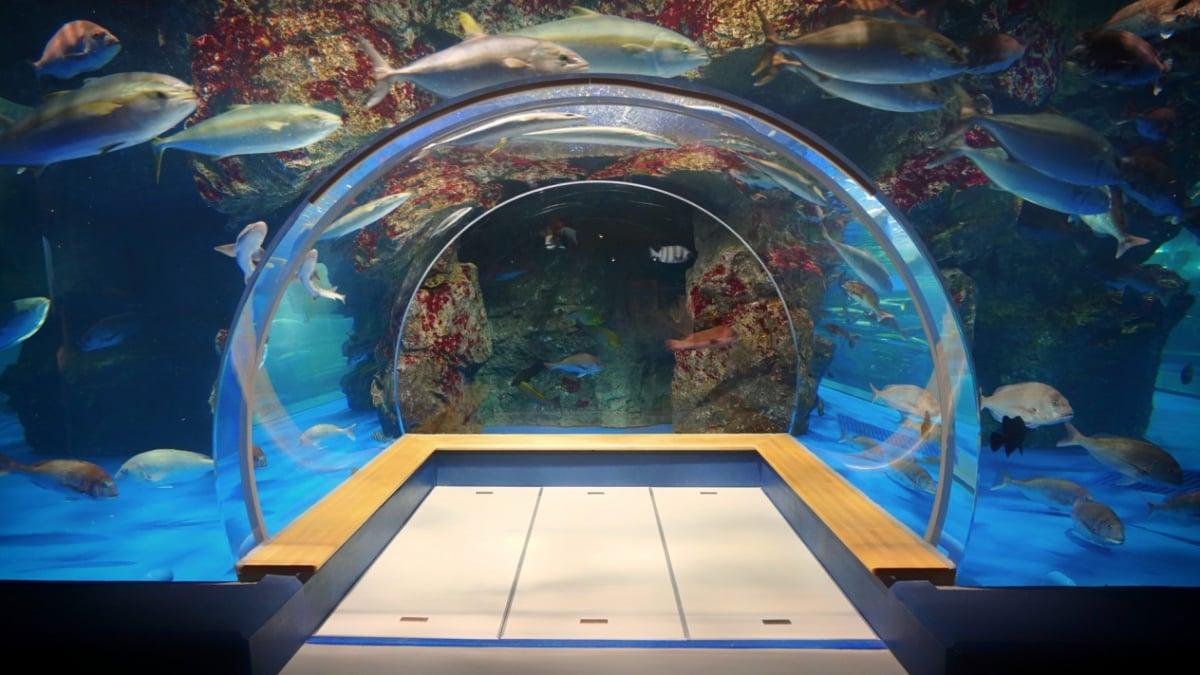 ま の 水族館 とじ DMMかりゆし水族館 沖縄に新しいカタチのエンタテイメント水族館