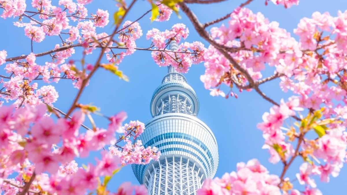 【絶景】河津桜とスカイツリー、今が見ごろの早咲き桜
