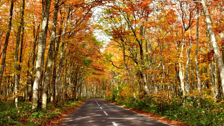 青森市のおすすめ観光スポットをぎゅっと集結!紅葉も楽しめる観光地21選