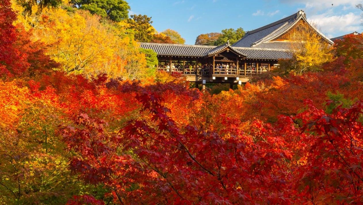 京都「東福寺」で紅葉観光!錦の雲海を通天橋と臥雲橋から見る幸せ。