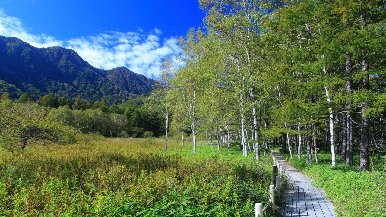 戦場ヶ原でハイキングを楽しもう!奥日光の「自然の宝庫」を満喫する旅