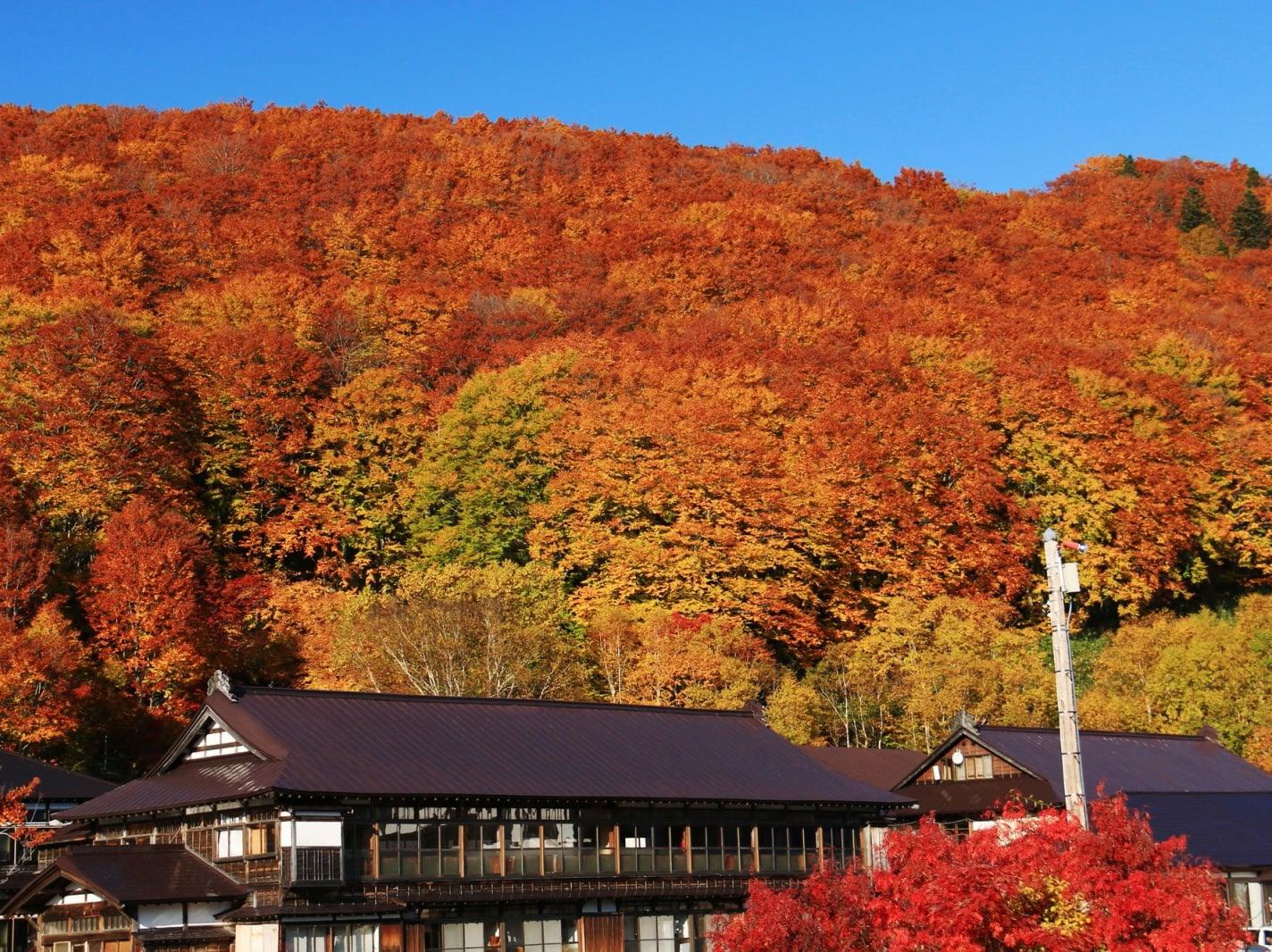 青森県酸ヶ湯温泉の観光スポット|温泉・八甲田の大自然・観光を楽しもう
