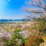 日本三名園の一つである茨城県水戸市の偕楽園