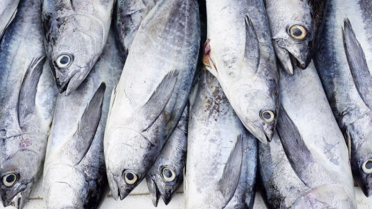 石垣島でおすすめ鮮魚店!漁港内を巡って旬の魚を堪能しよう